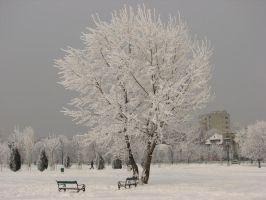 Winter Scenes 5 by andreym24