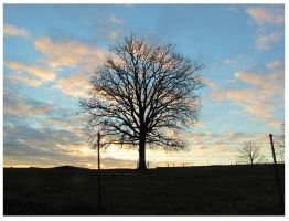 Sunset Tree-  Fairview by CrystalMarineGallery