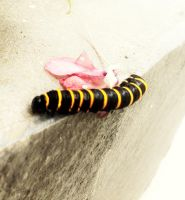 Caterpillar by PedroHenrique-2