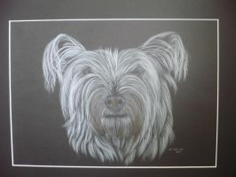skye terrier cross snowy 2 by shirls-art