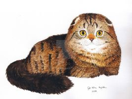 Brown Tabby by Binnus