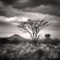 Tsavo West III by Jez92
