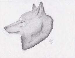 Cool, Calm, Collected by KolaWolf