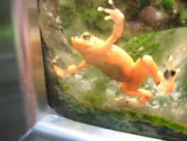 Frog Stock 2 by LLAP
