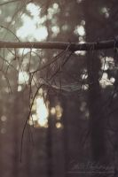 Cobweb in deep woods by Estelle-Photographie