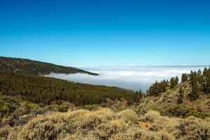 Forest above the clouds by attomanen