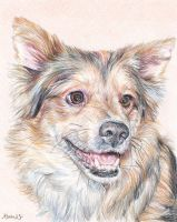 Vito - dog portrait by whiterabbitart