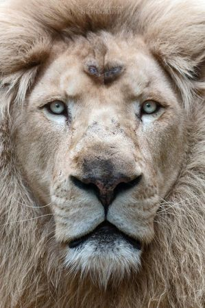 Here is the King! by Seb-Photos
