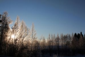 frosty trees by werneri