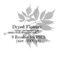 Dryed Flowers by zzaarr-stock