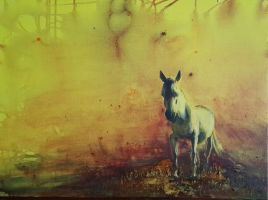 White horse by 8025glome