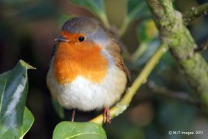Red Red Robin by MichaelJTopley