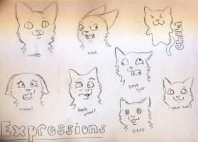 Expressions by vvinterpaws