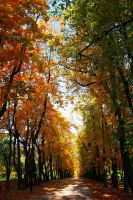 golden autumn by Jester-Genso