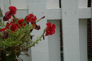 Red Flowers 3 by Fiction-Art-Author