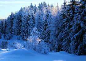 winter forest by KariLiimatainen