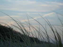 Seagrass by illused
