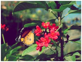 butterfly by geyl