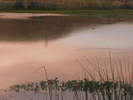 Stanislaus County Wetlands VI by Synaptica