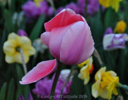 Shades Of April 29 by dandy-cARTastrophe