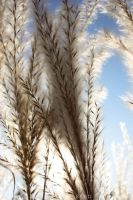 Reed by fuel2water