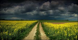 Clouds over the golden fields by WiciaQ