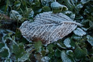 Cold and frosty morning by SupersonicA