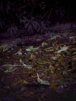 Autumn Leaves by nicolizet