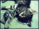Cat Music by esotico