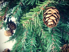 Pinecones by evelynrosalia