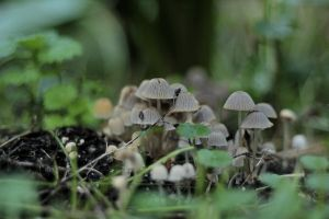 242 - Little mushrooms... by AnnaMagdalenaPe