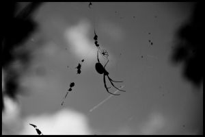 Golden orb weaving spider by FlamingAvocado