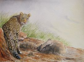 Panthera pardus saxicolor(Persian leopard) by Leogon