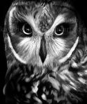 Owl by kayleighmc