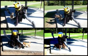 Celty Cosplay  and dogs by slayer500