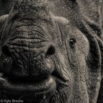 The Rhino by Kyle197