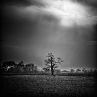 a tree by julie-rc