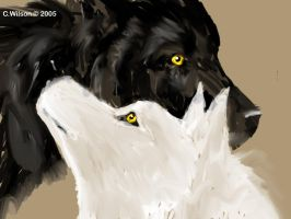 Black Wolf:White Wolf by WindSeeker
