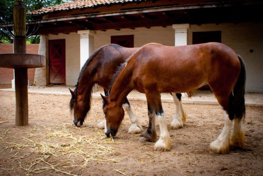 HORSES by JCPHOTOGRAPY