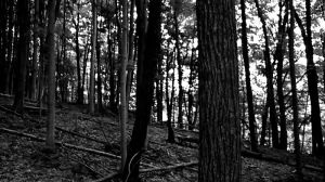 The Woods by MsSlasher