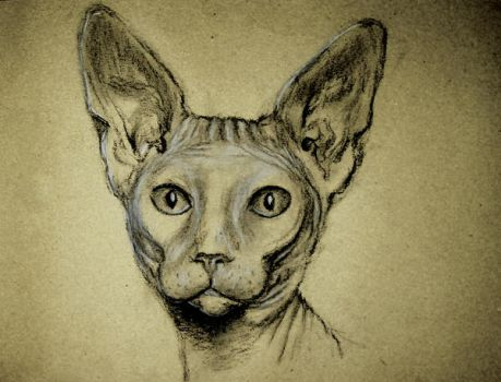 a sketch of sphynx by kristina323