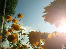 flowers of the sun 2 by DarraChese