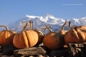 Mountain Pumpkins by sumangal16