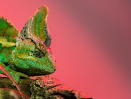 Lizard 4 by tpphotography