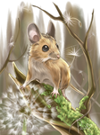 Wood Mouse by Pawlove-Arts