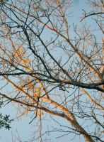 Fall Leave Tree Branches by TheWizardofOzzy