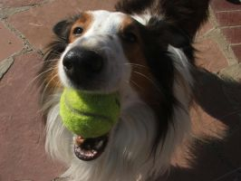 Murph and a tennis ball by way2col4u