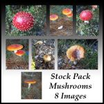 Stock Pack - Mush-Shrooms by Gracies-Stock