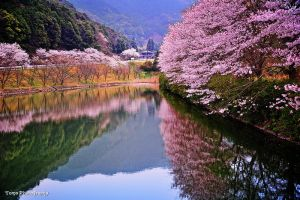 Spring in Japan by WindyLife
