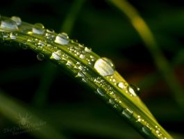 Water Drops by TheFunnySpider